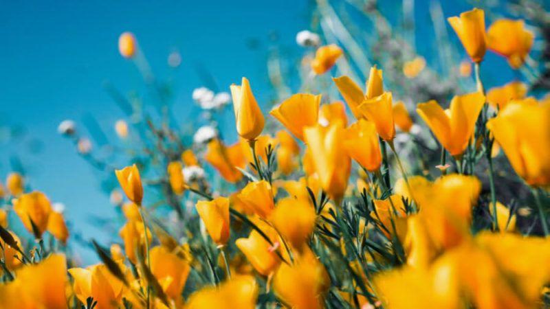 sophrologie contre pollen