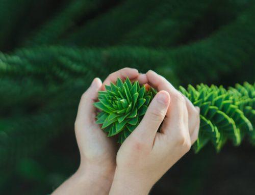 L'Éco-anxiété est-elle soluble dans l'Ego-bienveillance ?